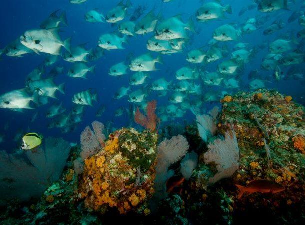 coiba penal colony fish image