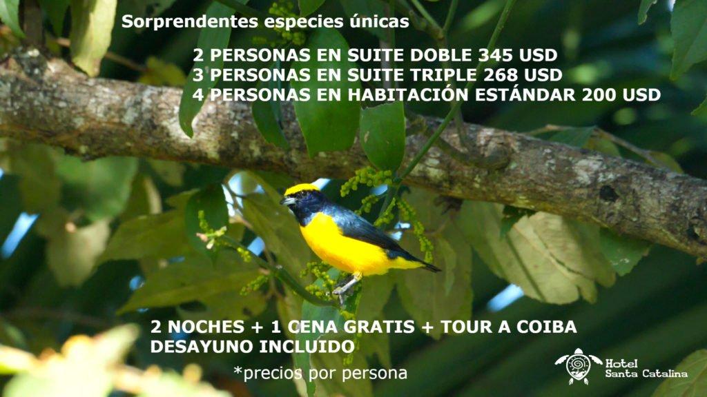 Promocion avistamiento de pájaros a isla Coiba, con el hotel Santa Catalina